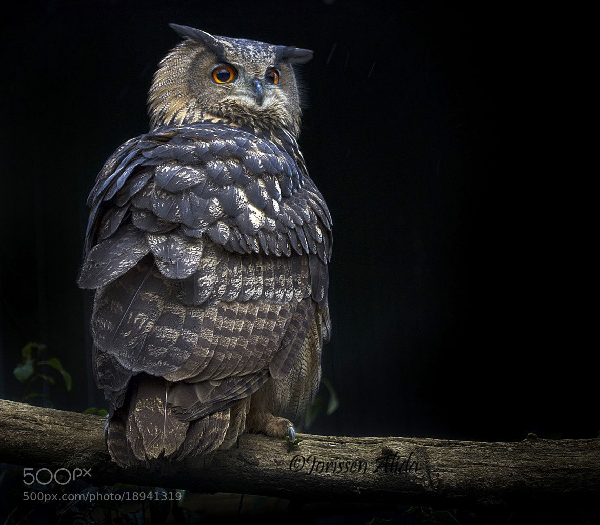 Photograph First Knight by Alida Jorissen on 500px
