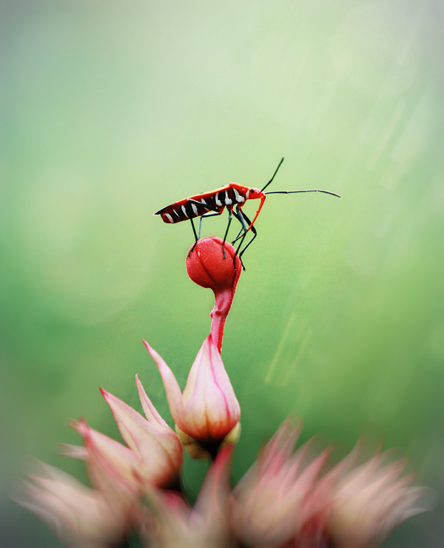 Photograph On top by Arief Perdana on 500px