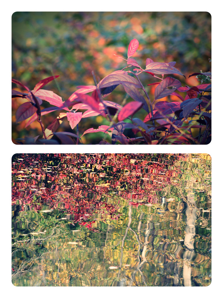 Photograph Autumn diptych by Any Guelmann on 500px