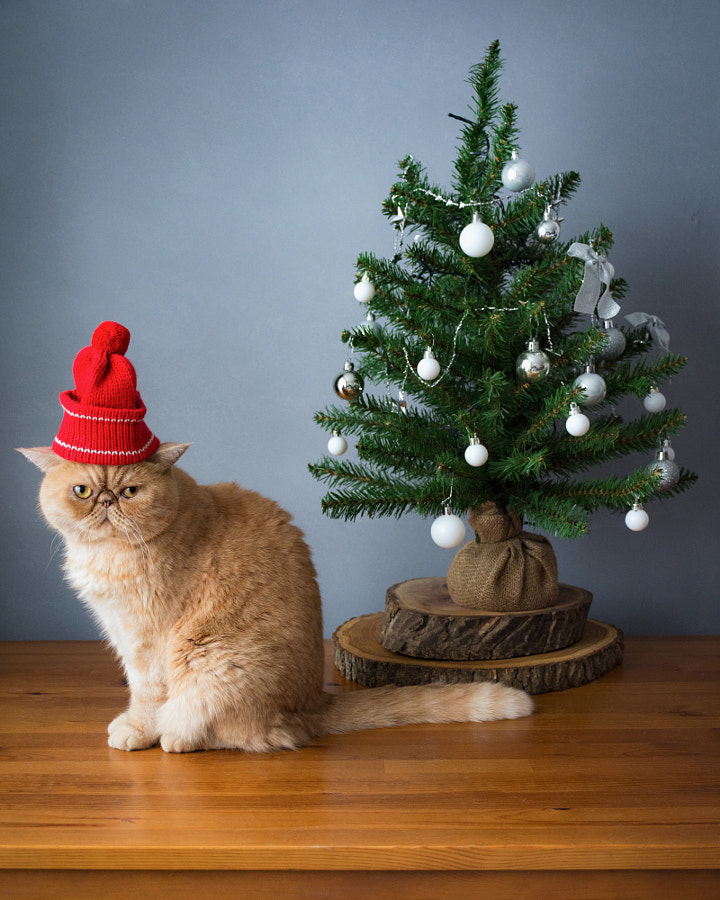 Christmas cat by Vladislav Nosick on 500px.com