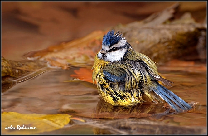 Photograph Wet Wet Wet !! by John Robinson on 500px