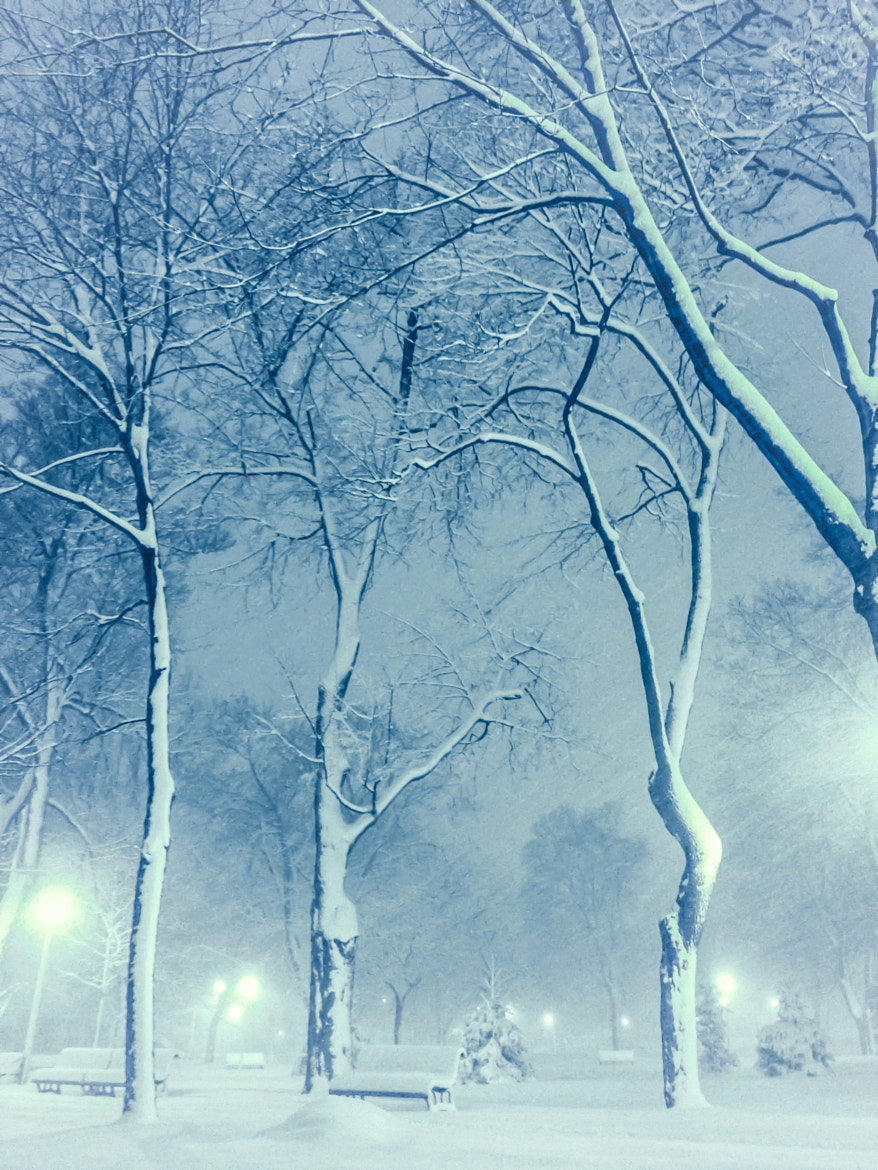 Photograph Blue winter by Elly Fox on 500px