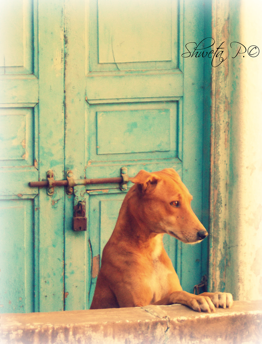 Photograph Still Waiting For YOu by Shweta Paryani on 500px