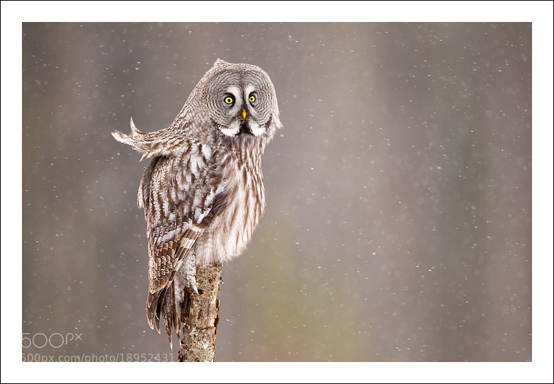 Photograph Let it snow.. by Jules Cox on 500px