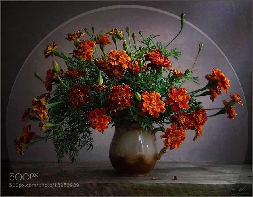 Photograph Untitled by Мetron Nataliia Kylyvnyk on 500px