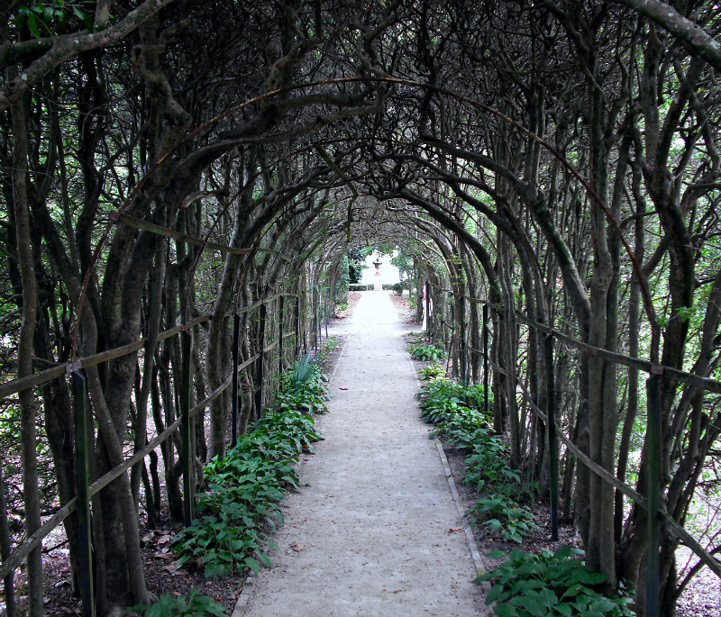 Photograph Tree Tunnel by Brian Matthews on 500px