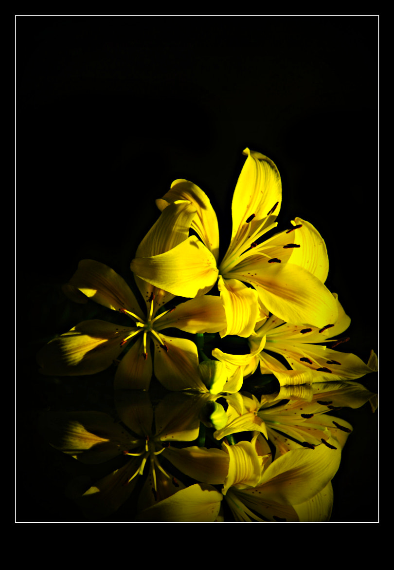 Photograph Lillies..reflections by Arun Kalrickal on 500px