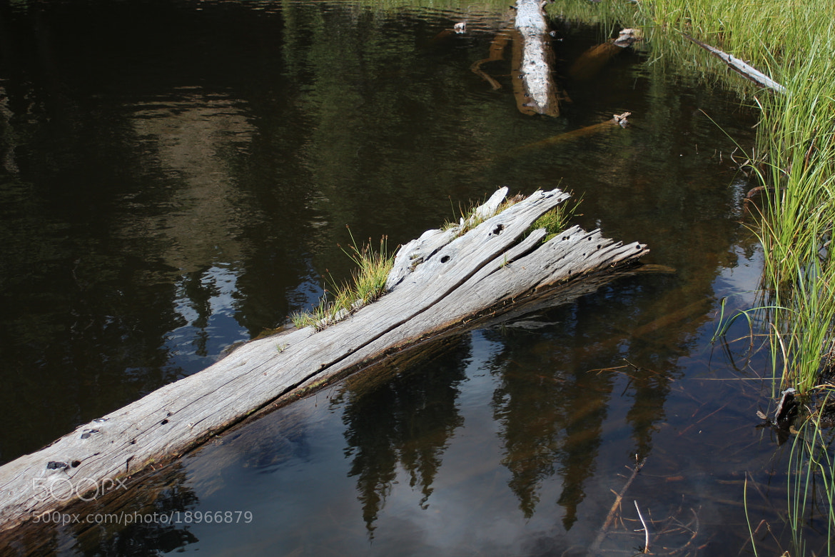 Photograph Pine Reflection by Leigh Taylor on 500px