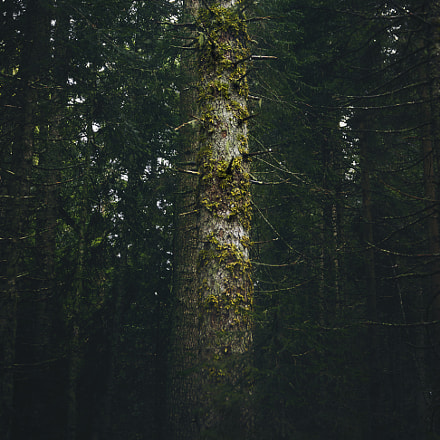 Old tree in dense forest