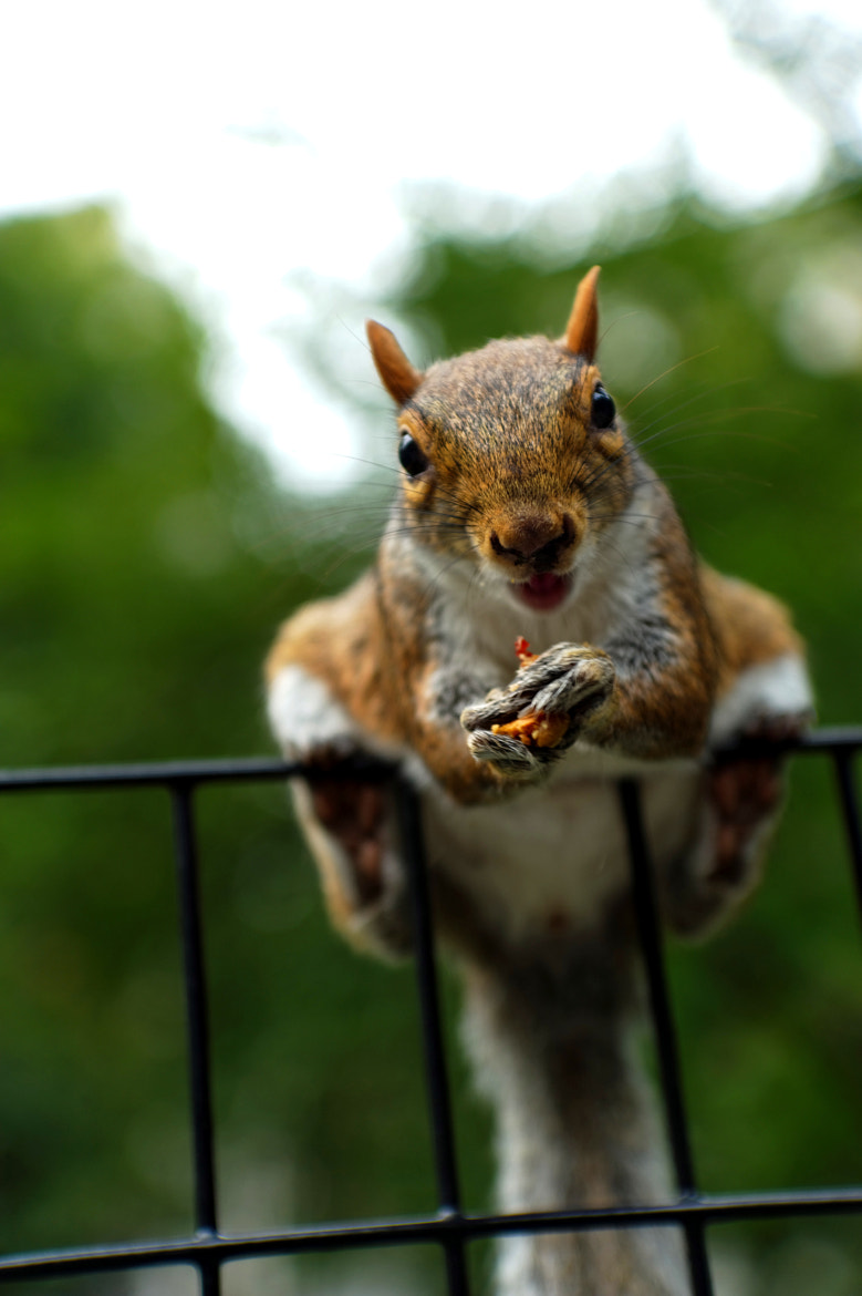 Photograph The smiling squirrel is my friend! by Michael FRANCHITTI on 500px
