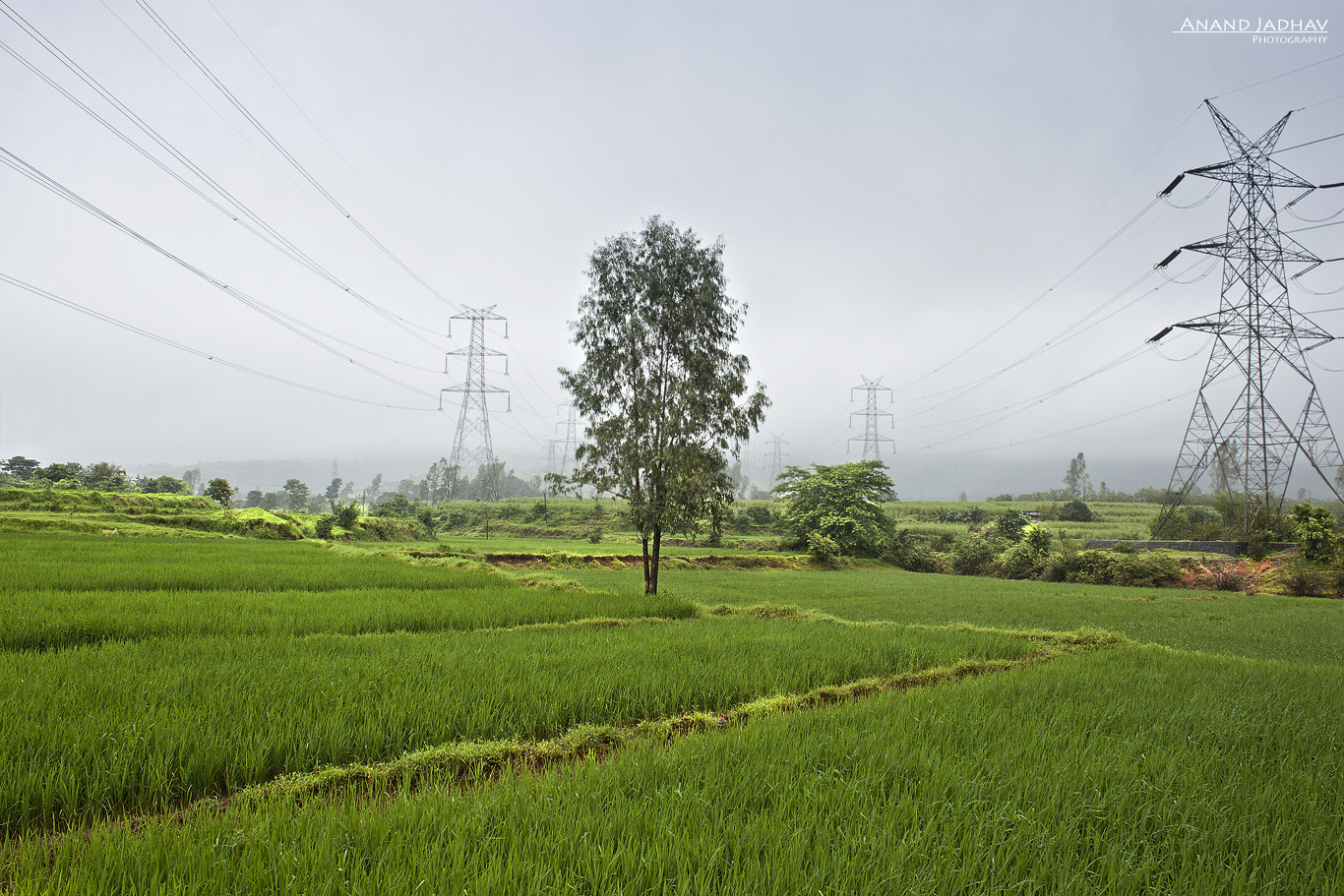 Photograph The Green Depth !! by Anand Jadhav on 500px