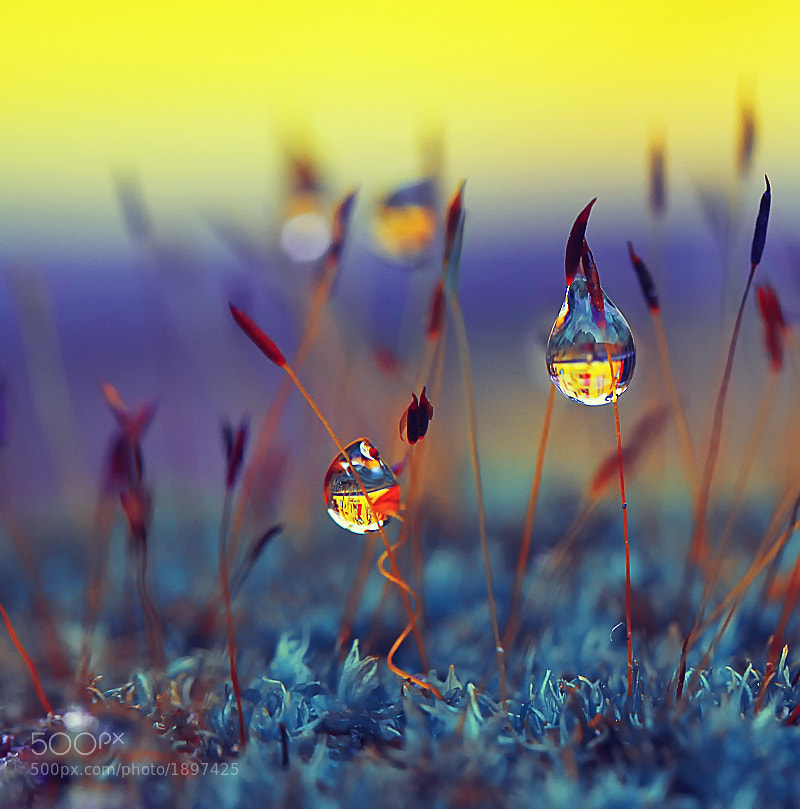 Photograph Romantic dews by Diens Silver on 500px