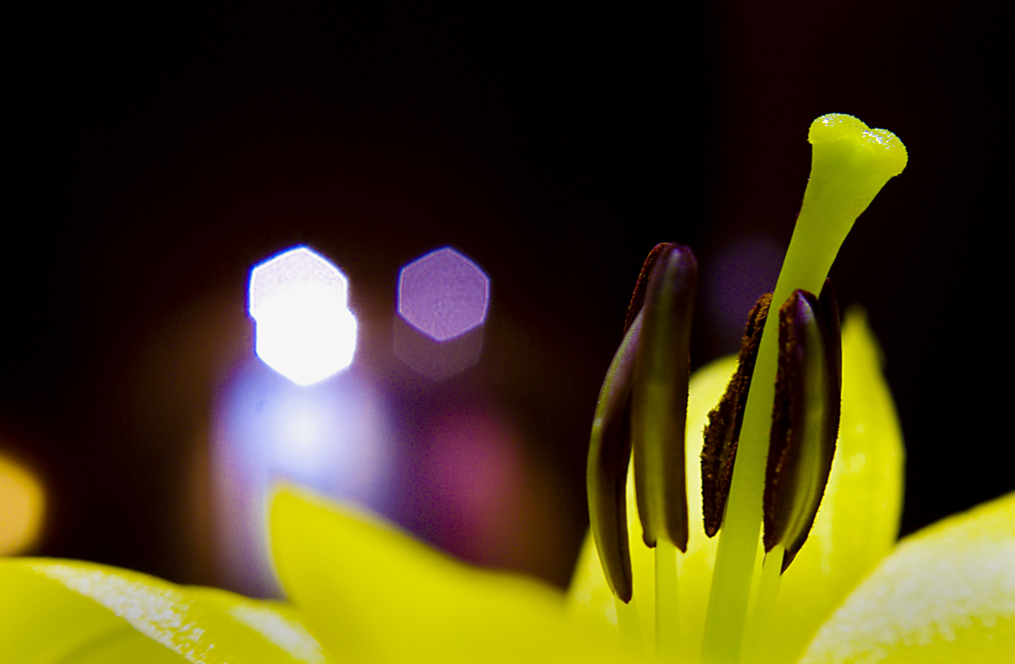 Photograph Flower Bokeh by TL PhotoWorks on 500px