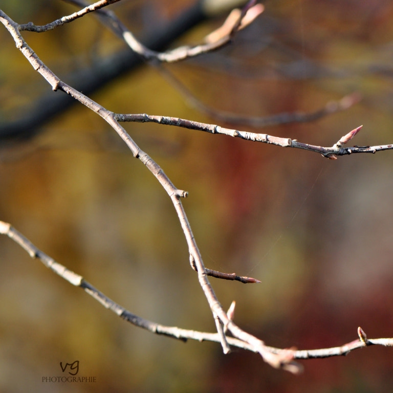 Photograph .twigs.autumn. by Verena G. on 500px