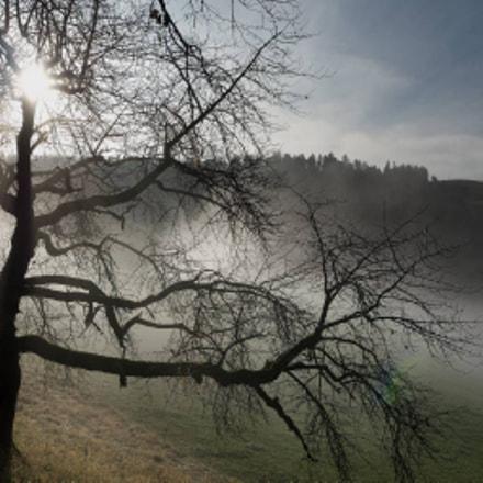 Sun piercing fog