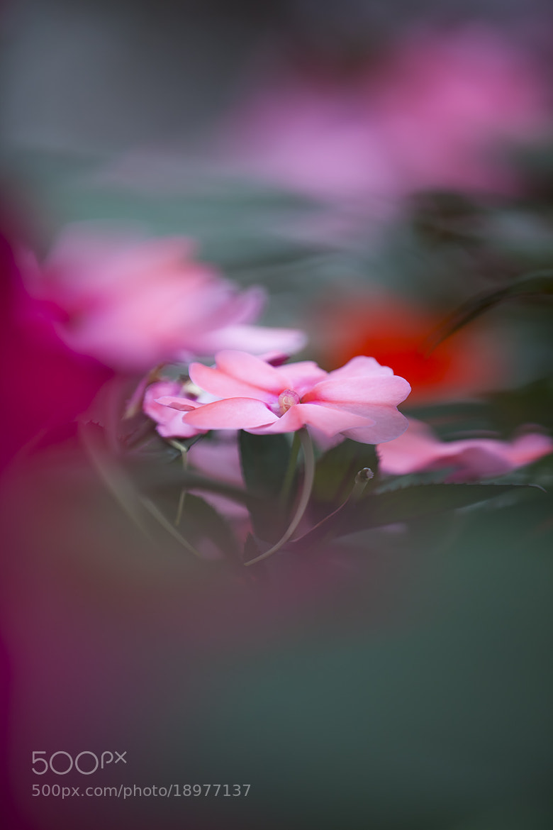 Photograph in the Dream by Hideaki Yoshida on 500px