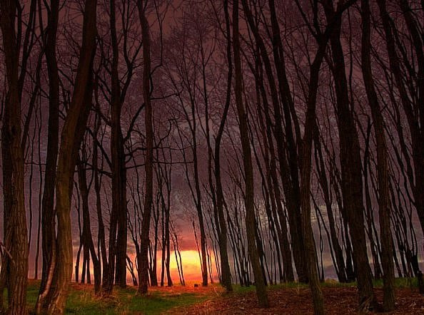 Photograph Forest Glow by Lisa Jones on 500px