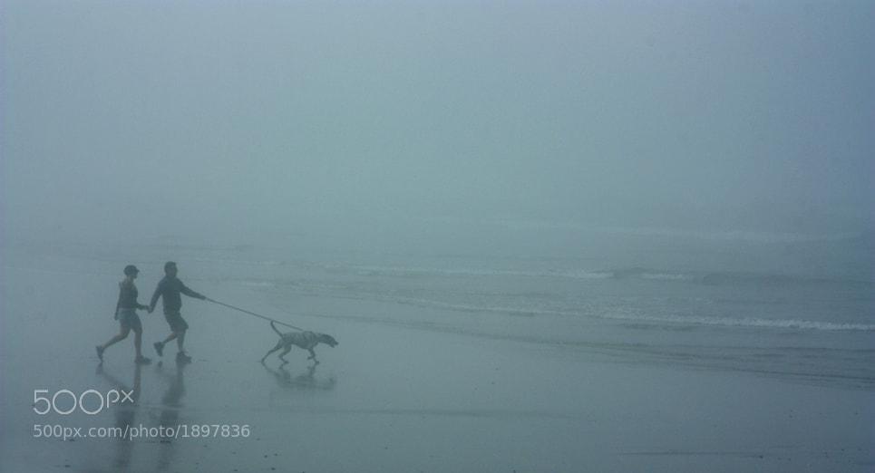Photograph Fog Dog by Jack Culbertson on 500px