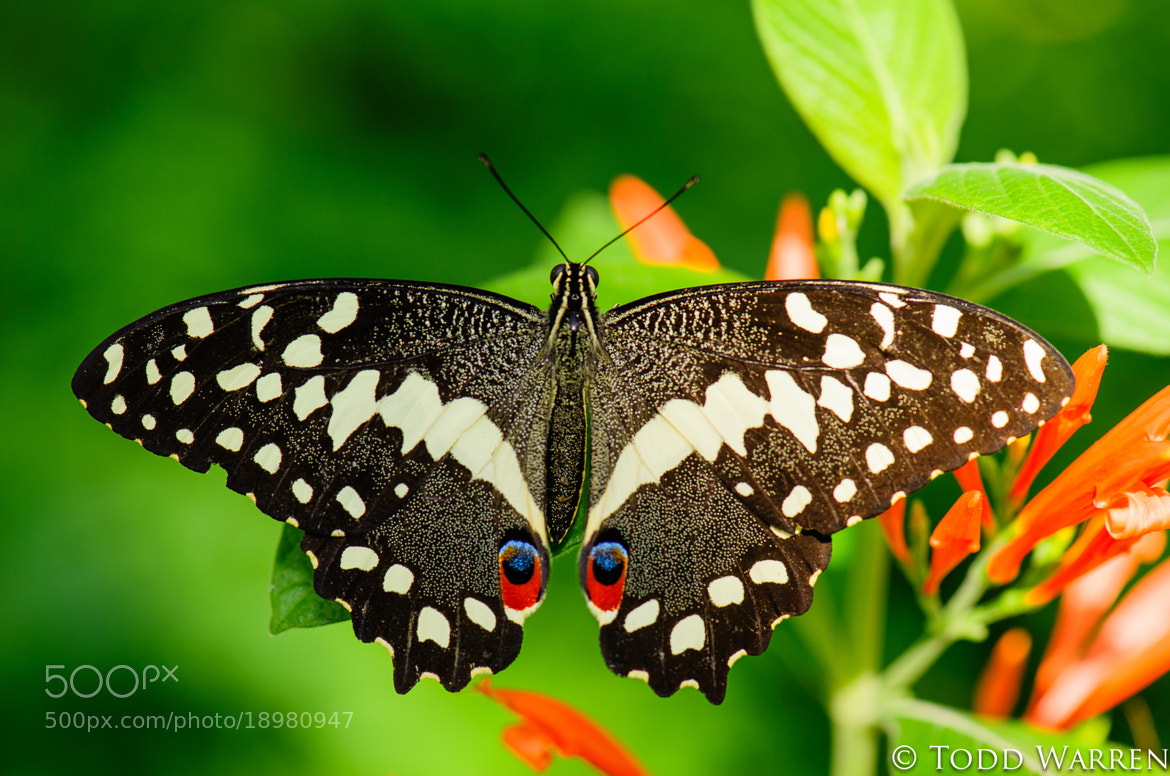 Photograph Butterfly by Todd Warren on 500px