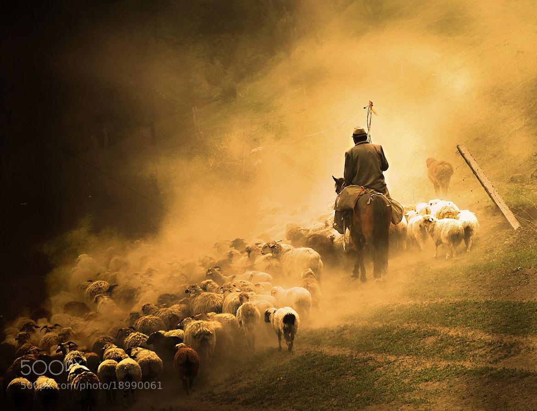 Photograph 牧羊人 by 大  寫D on 500px