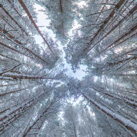 Balmoral Trees