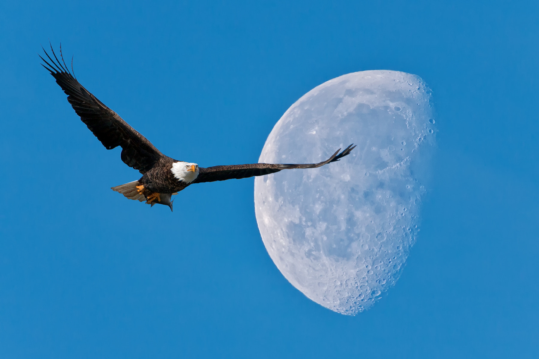 "Photograph ""Fly Me To The Moon"" by Scott Evers on 500px"