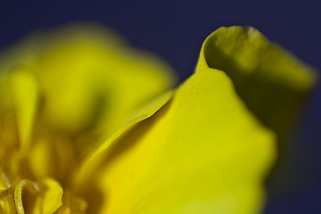 Photograph And it was all yellow  by Julia S on 500px