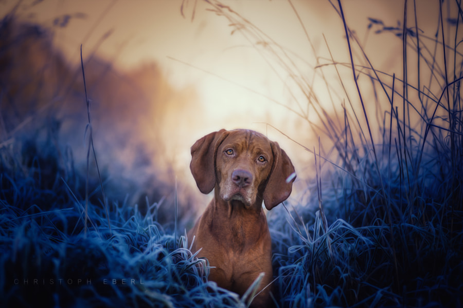Best Friends by Christoph Eberl on 500px.com