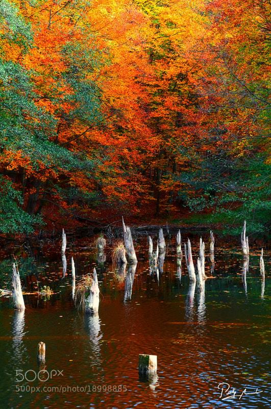 Photograph Murderous lake by István Ponty on 500px