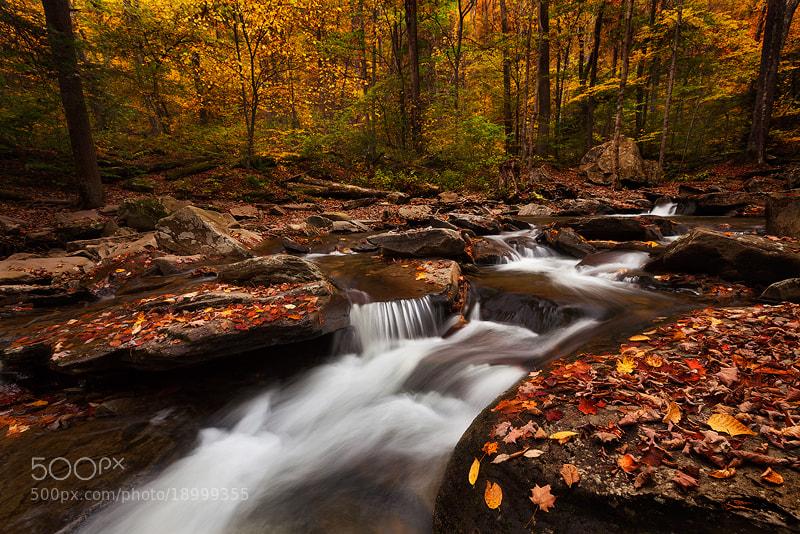 Photograph Autumn at Ricketts Glen by Sarah Marino on 500px