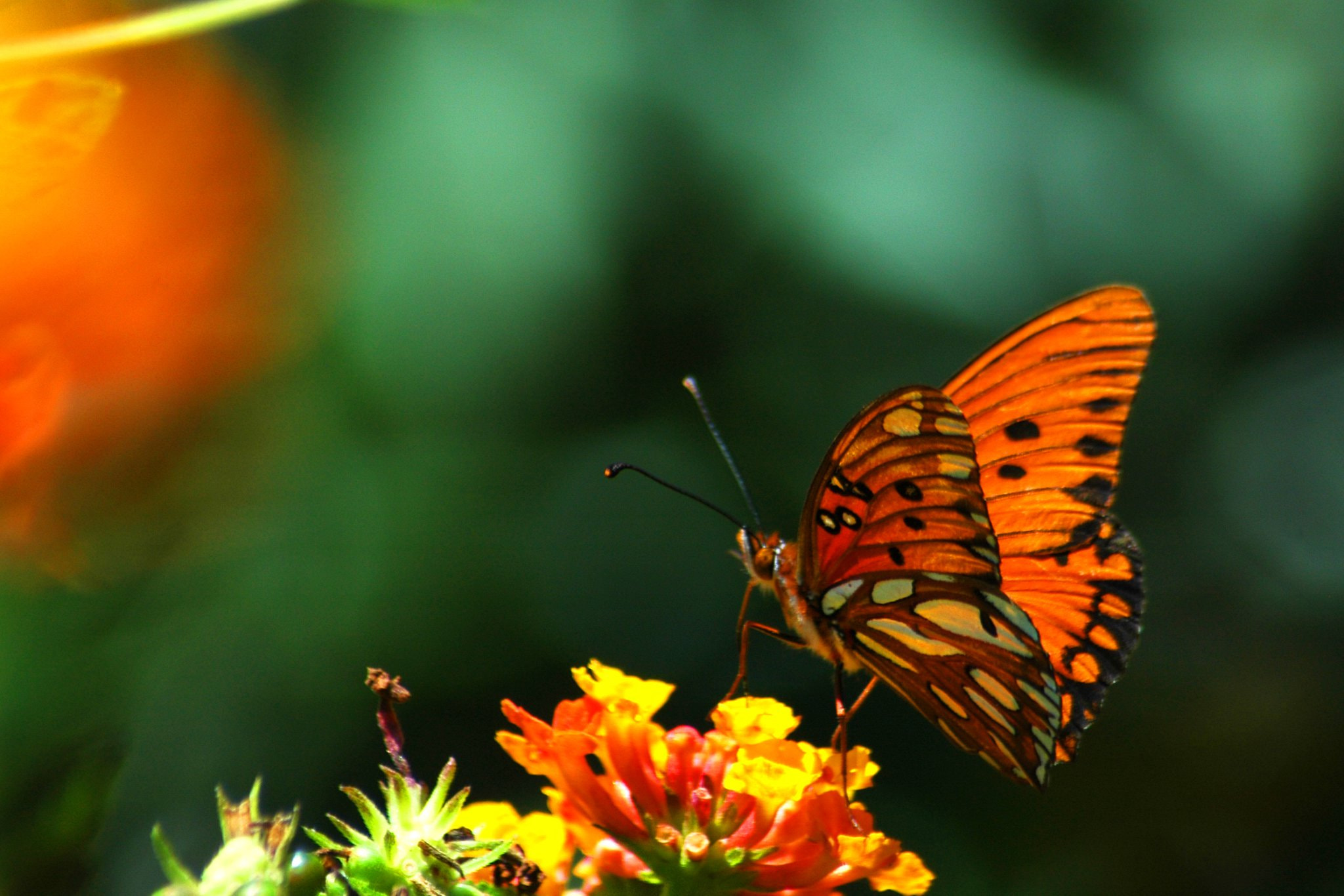 Photograph butterfly by Eric Dawes on 500px
