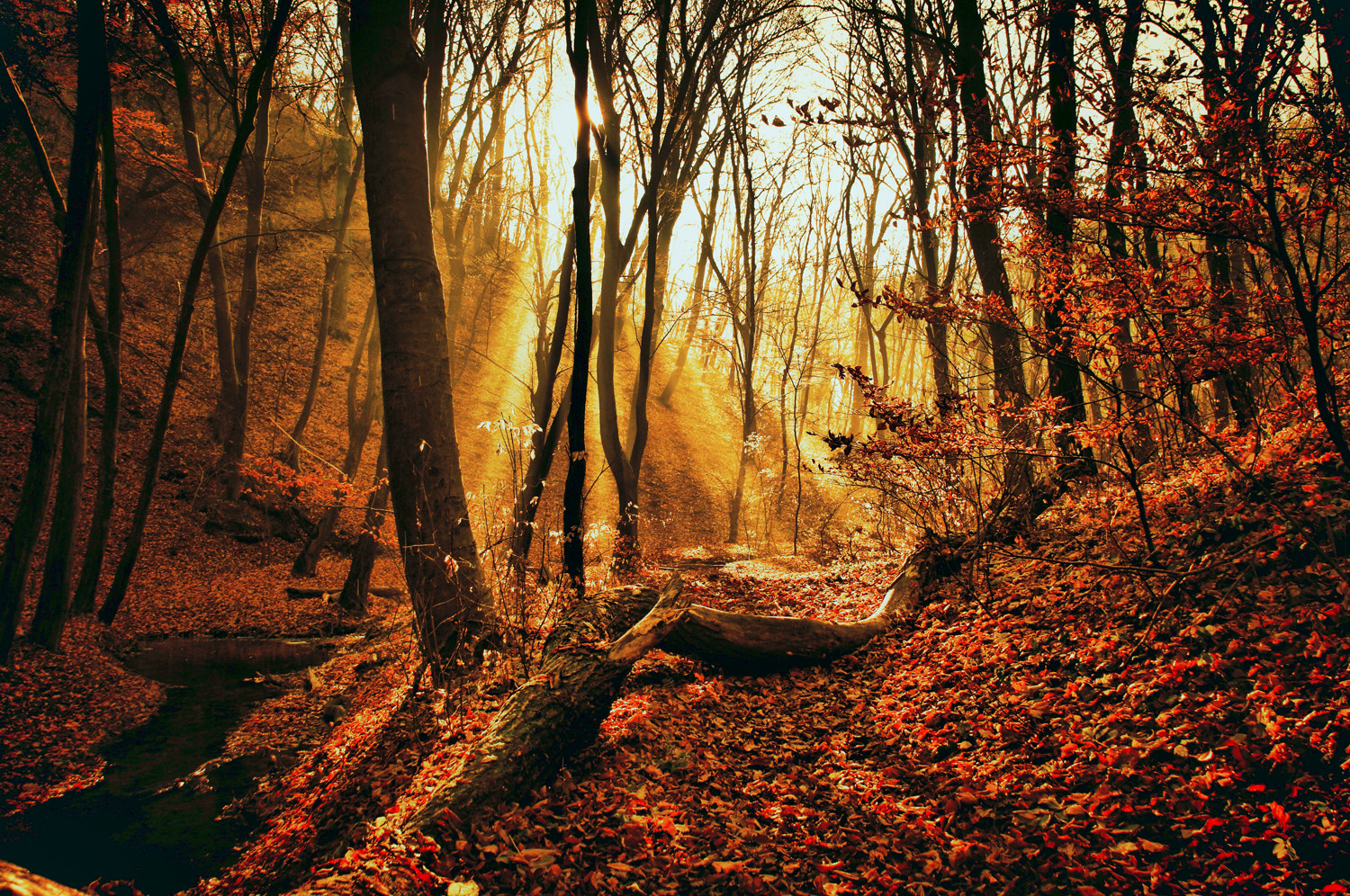 Photograph On the path by Andy 58 on 500px