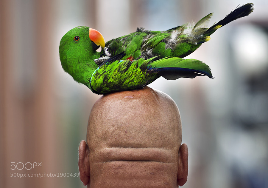Parrothead by schlumbeb  on 500px.com
