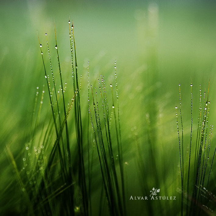 Photograph After the rain by Alvar Astúlez on 500px