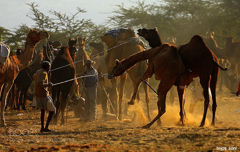 "Photograph ""pushkar fair 2012 by Tejas Soni on 500px"