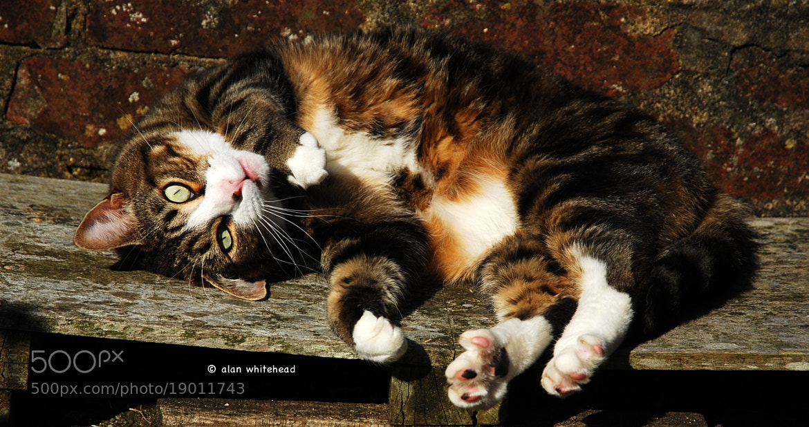 Photograph Tickle my tummy! by Alan  Whitehead on 500px