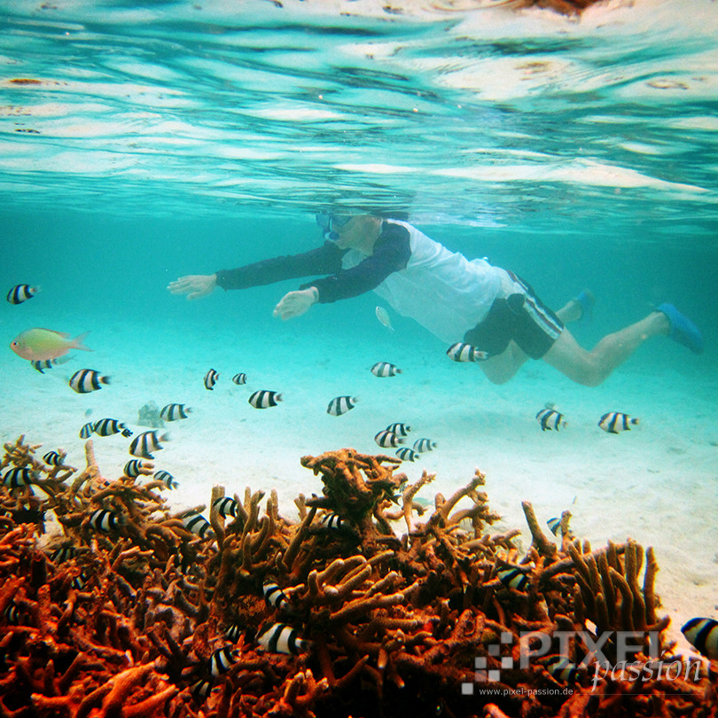 Photograph snorkeling by Pixel Passion on 500px