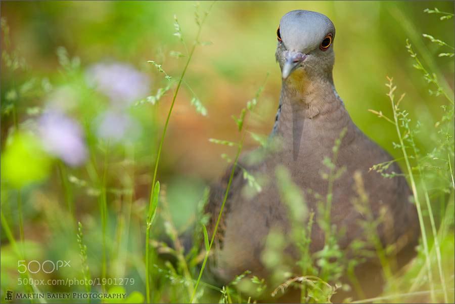 Photograph Madam Dedeppopo by Martin Bailey on 500px