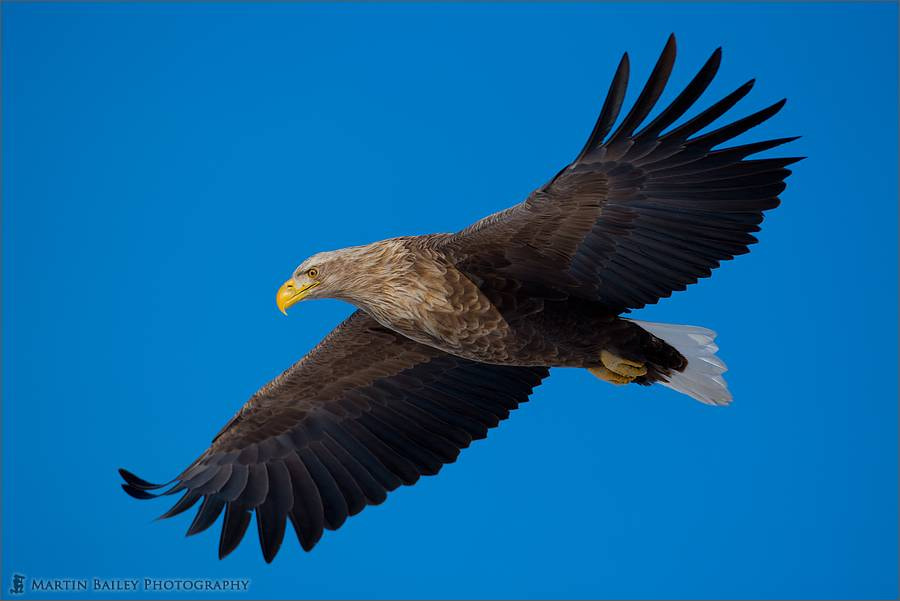 Photograph Eagle Eye by Martin Bailey on 500px
