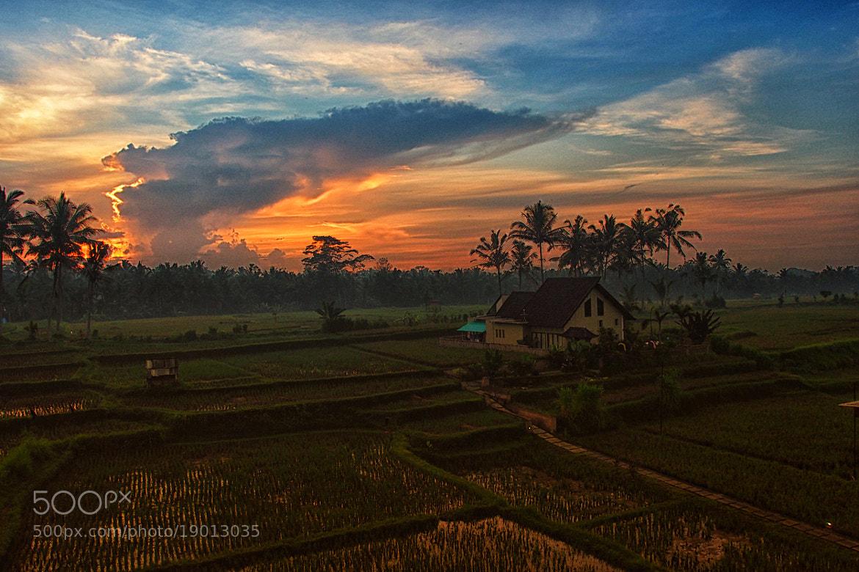 Photograph Ubud in the morning by Prabu dennaga on 500px