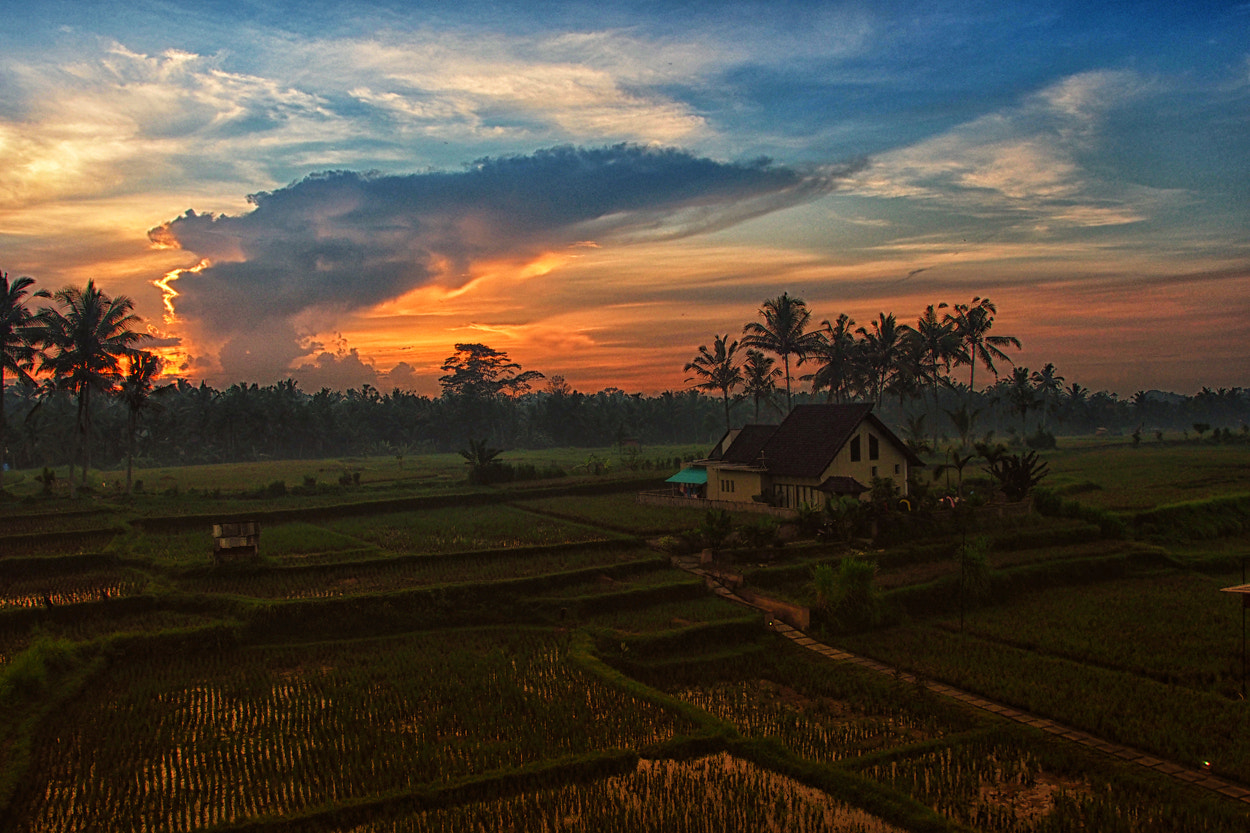Photograph Ubud in the morning by Prabu dennaga on 500px