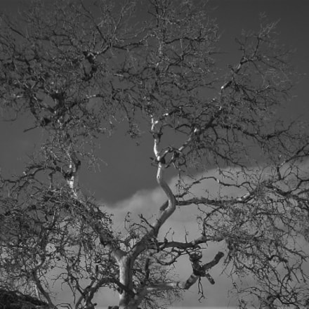 Canyon Tree Against Sky, Sony DSC-WX5