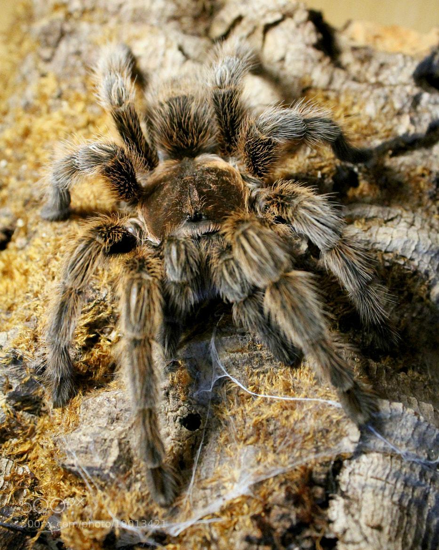 Photograph Bird Spider by Leon Utikal on 500px