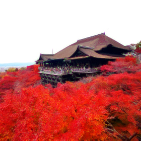 Kiyomizu-dera by Bu Balus (nickyth13)) on 500px.com