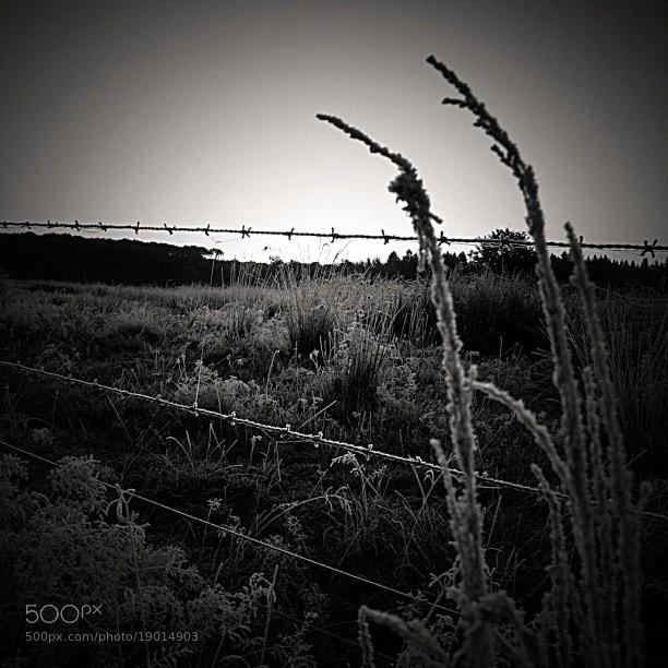 Photograph Winter grass by Roderik van Loef on 500px