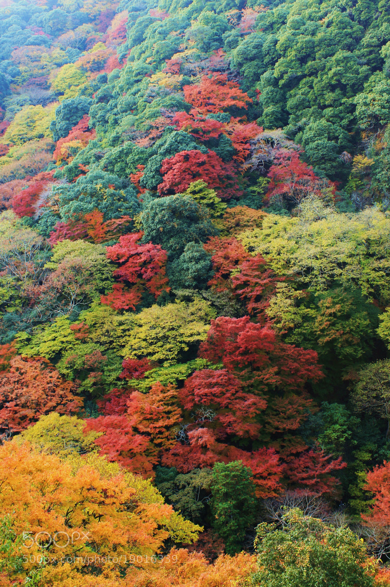 Photograph Autumn colors #8 by S.m. Yang on 500px