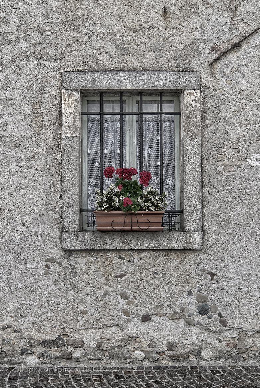 Photograph Nogaredo di Corno by Daniele Sandri on 500px