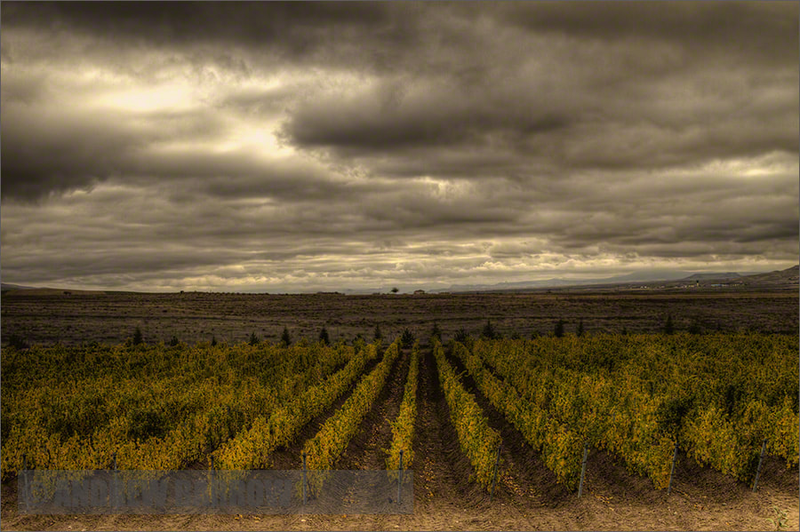 Photograph Kavaklidere Vineyard by Andrew Barrow ARPS on 500px