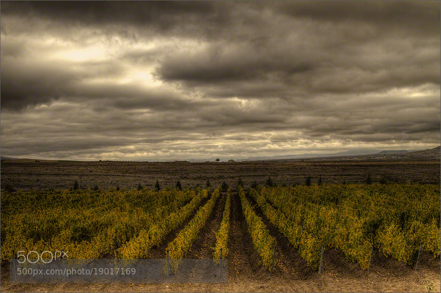 Photograph Kavaklidere Vineyard by Andrew Barrow LRPS on 500px