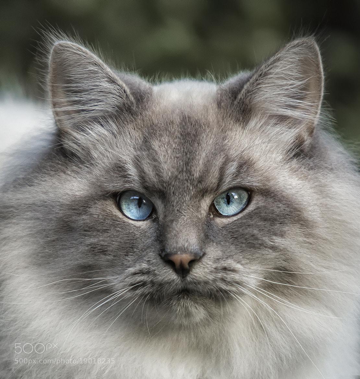 Photograph cat by Detlef Knapp on 500px